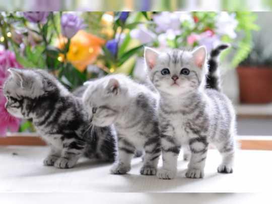 katzen wien zu verschenken